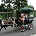 市役所の廻りを周遊。いつか保育園の体験馬車や、学生による馬車制作などにつながれば。